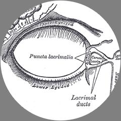 Lacrimal Videos